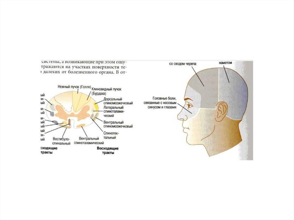 Головные боли с пульсацией: симптоматика и причины