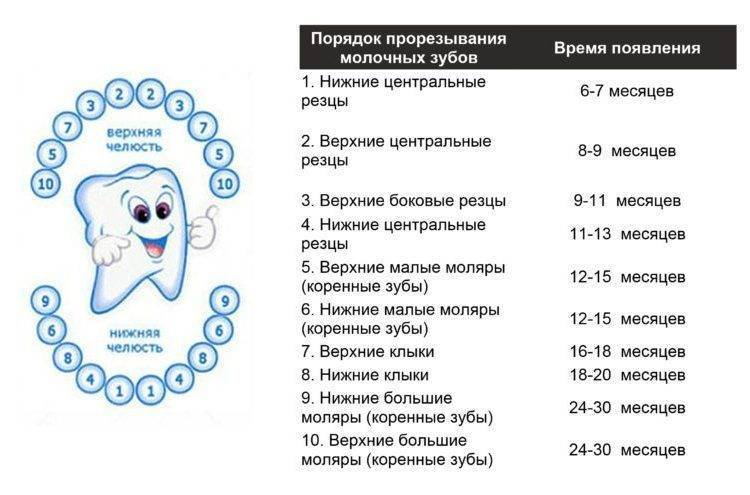 Прорезывание коренных зубов у детей - симптомы, как режутся коренные зубы