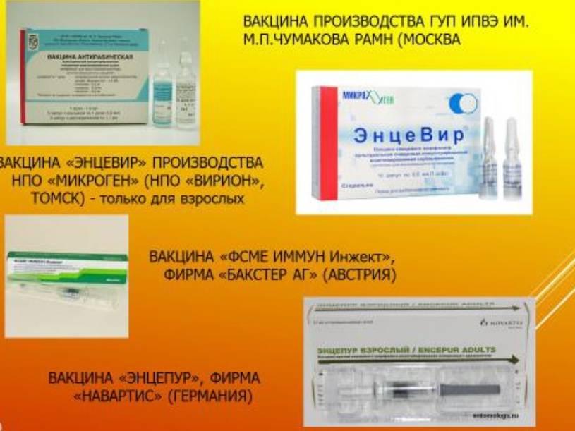 Прививка от энцефалита — профосмотр