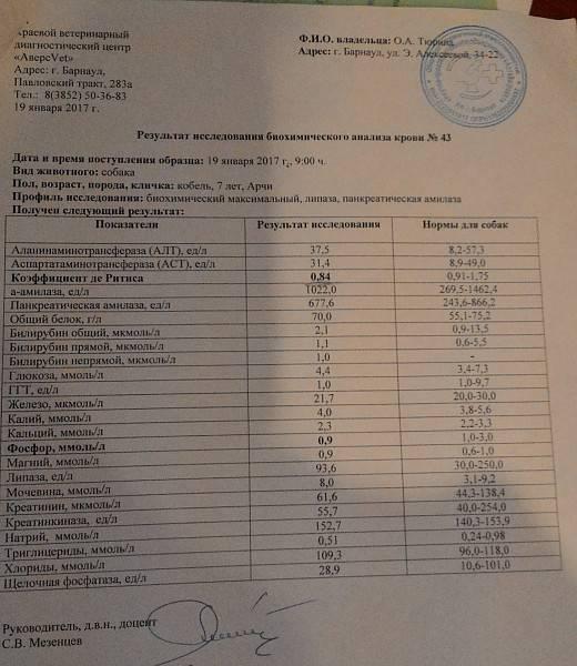 Анализ крови на аллергены в москве: цены и клиники