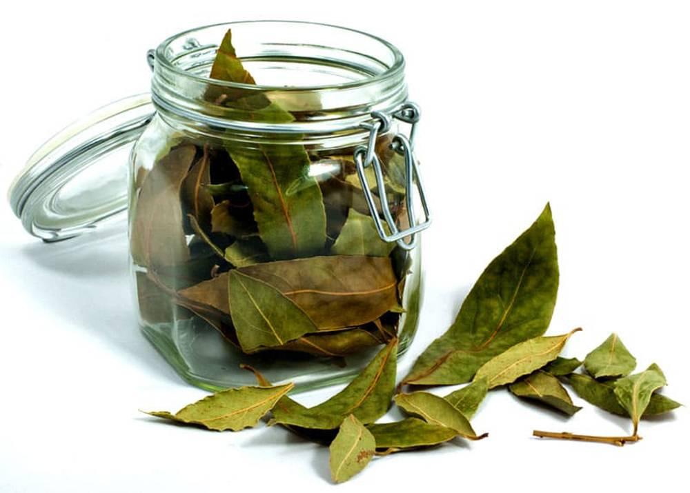 Лекарственные травы от псориаза: названия, сборы, отвары
