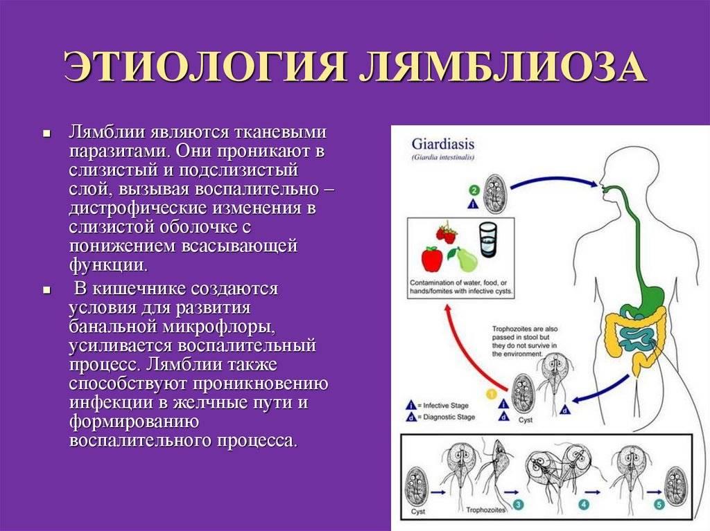 Непаразитарные кисты печени - симптомы, современные методы диагностики и лечения | госпитальный центр семейный доктор