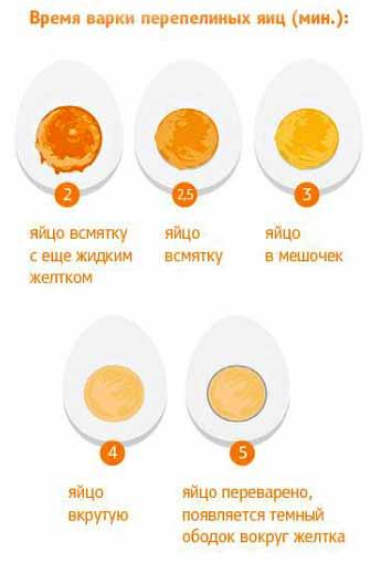 Сколько варить перепелиные яйца для ребенка: вкрутую, как правильно варить