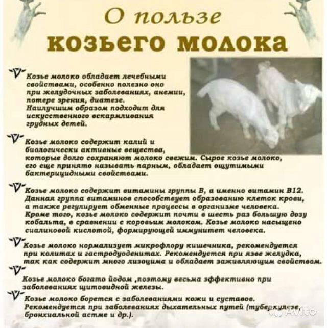 Нормы кормления козлят без козы. как кормить новорожденных козлят и молодняк