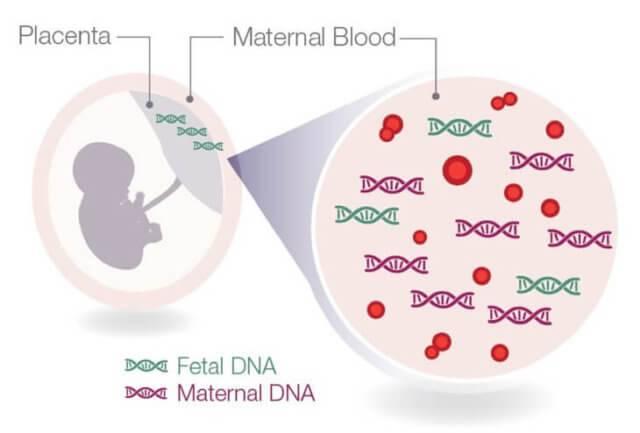 """Определение пола будущего ребенка в сети клиник """"ниармедик"""""""