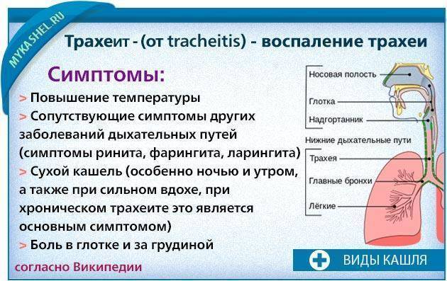 Острый ларингит и трахеит: симптомы, лечение, прогноз — онлайн-диагностика
