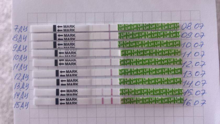 Можно ли тестом на овуляцию определить беременность