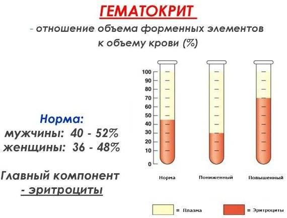 Общий анализ крови: полная расшифровка   медицинский центр ваше здоровье