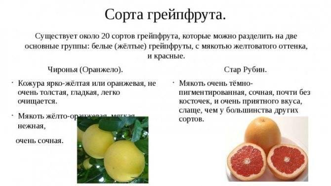 Грейпфрут при беременности: польза и вред грейпфрутового сока во 2 и 3 триместрах