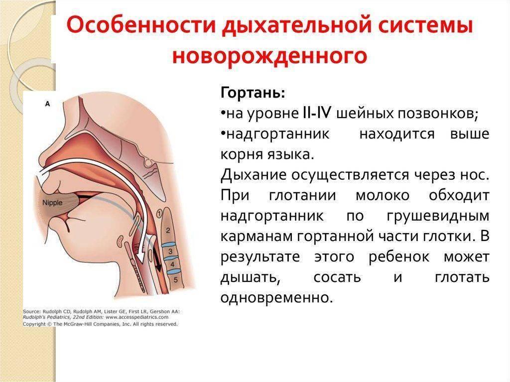 Хриплое дыхание у новорожденных. стридор