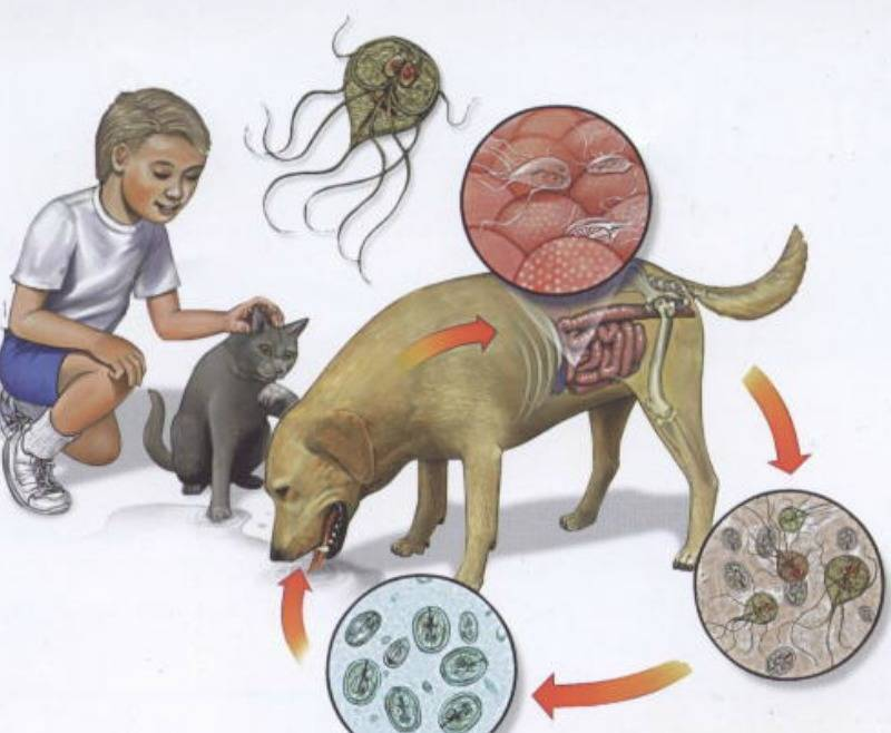 Грибковые инфекции уха, горла, носа, миндалин. эффективное лечение отомикозов, фарингомикозов и грибковых гайморитов у взрослых и детей - медицинский центр «эхинацея»