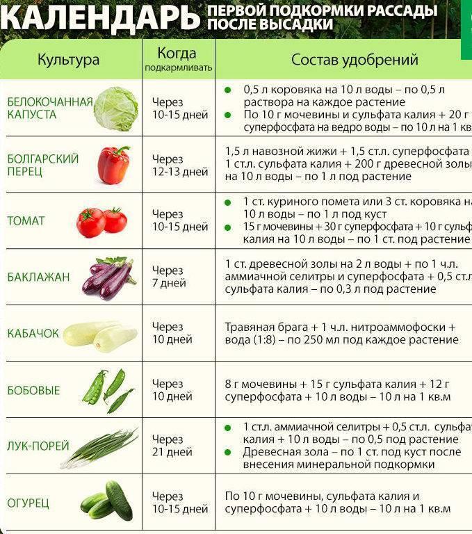 С какого возраста можно давать ребенку помидоры и огурцы в свежем виде и есть ли аллергия на томаты?