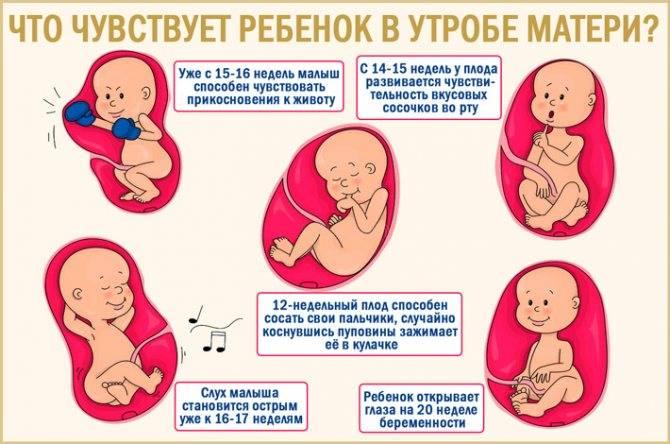 Привет, малыш! когда начинает шевелиться ребенок при беременности: комментарии акушера-гинеколога